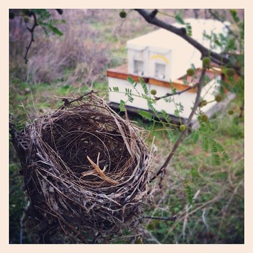 Signs of spring at Big Oaks Bee Yard