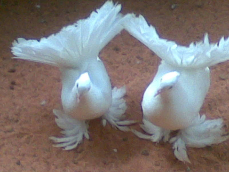 Pet Birds For Sale In Chennai Pet S Gallery