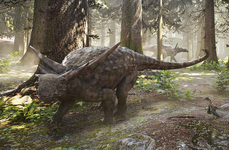 dinosaur-nodosaur-fossil-discovery-8