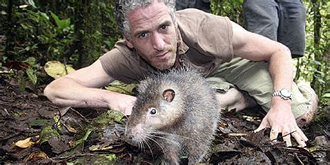 Expedition Discovers Rat as Big as a Cat   Throng