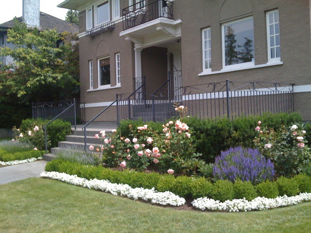 Traditional Roses and Lavender - Traditional - Landscape - vancouver