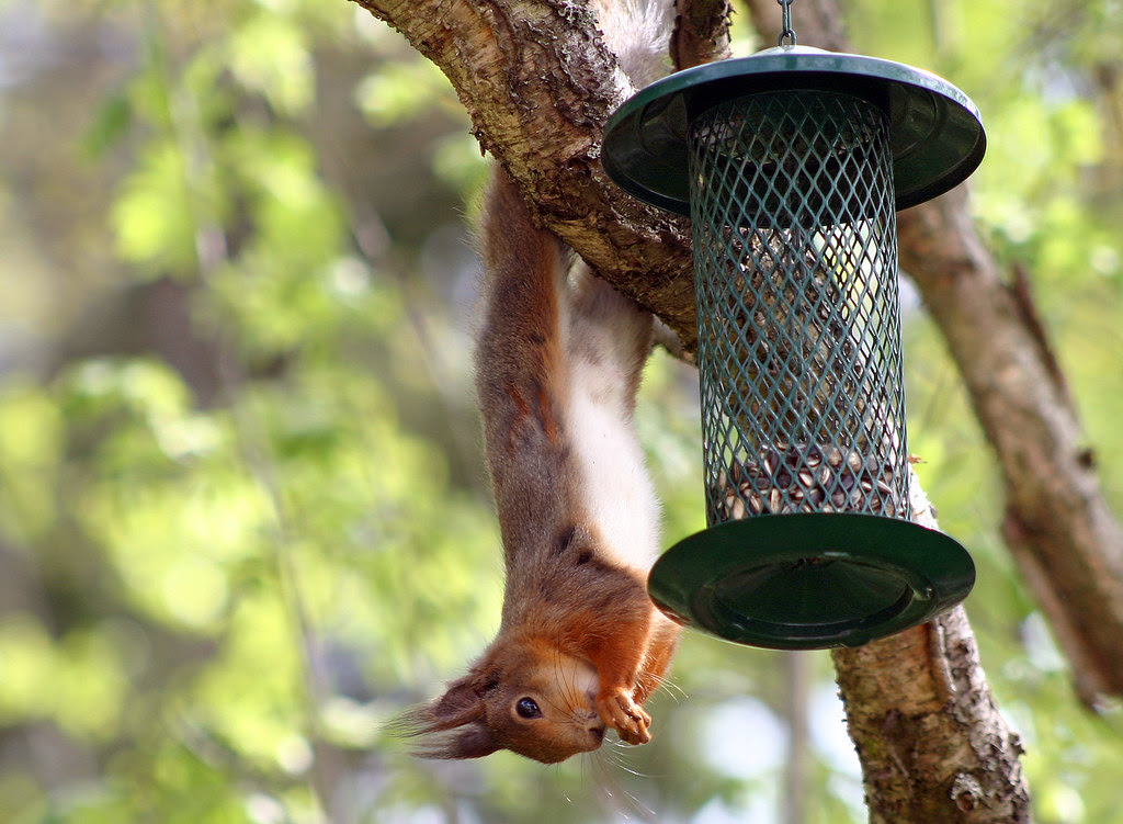 Hanging out at the bird feeder