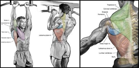 achieve huge upper body   exercise