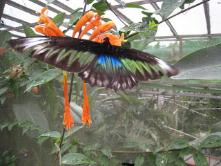 cameron highlands malaysia butterfly