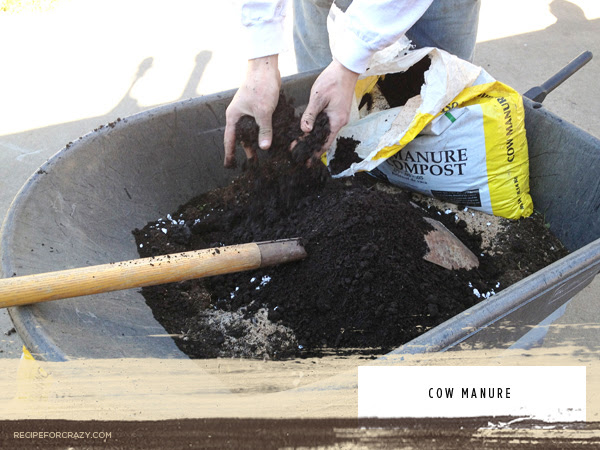 prepping your soil for food gardening