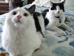 Moochie and Zak