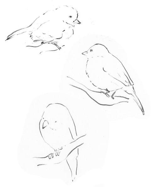 oiseaux1.jpg