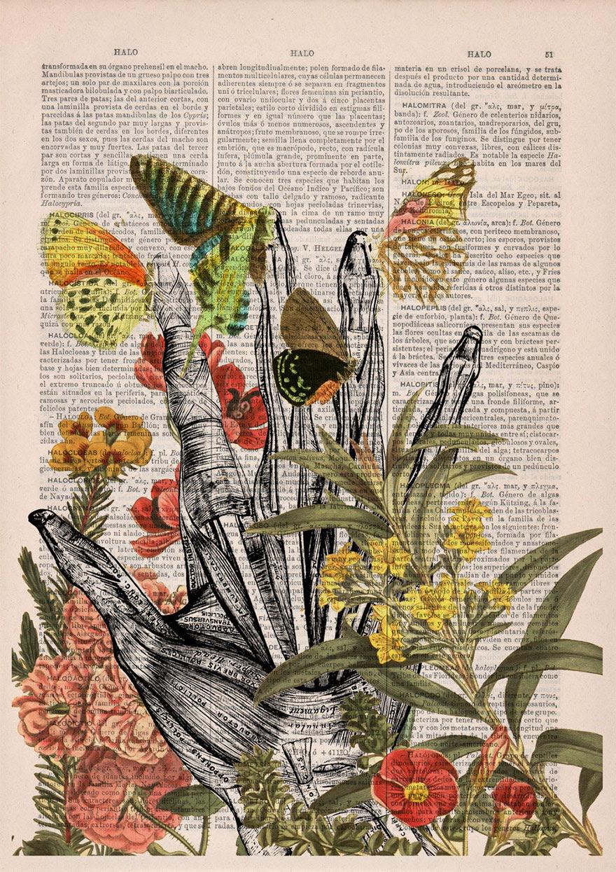 ilustraciones-anatomicas-flores-libros-viejos-prrint (6)