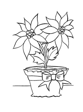 Christmas Flower In In A Pot Coloring Page Free Printable Coloring Pages