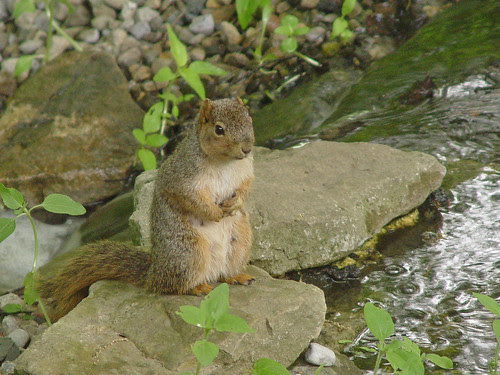 Squirrel at Cool Creek Park