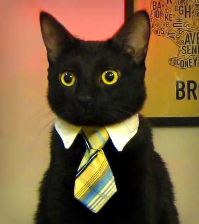 Cybergata Meme Kittehs Business Cat Or Is That Bizness
