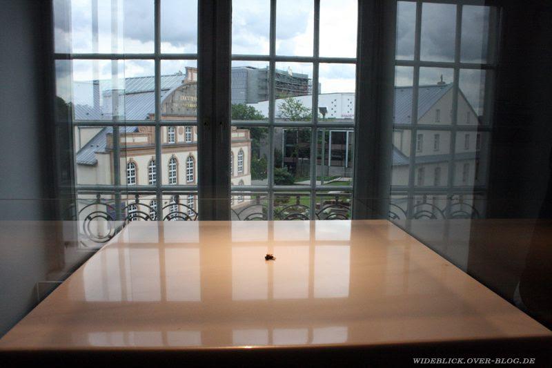 tsetsefliegen documenta13 d13 kassel 2012 wideblick.over-bl