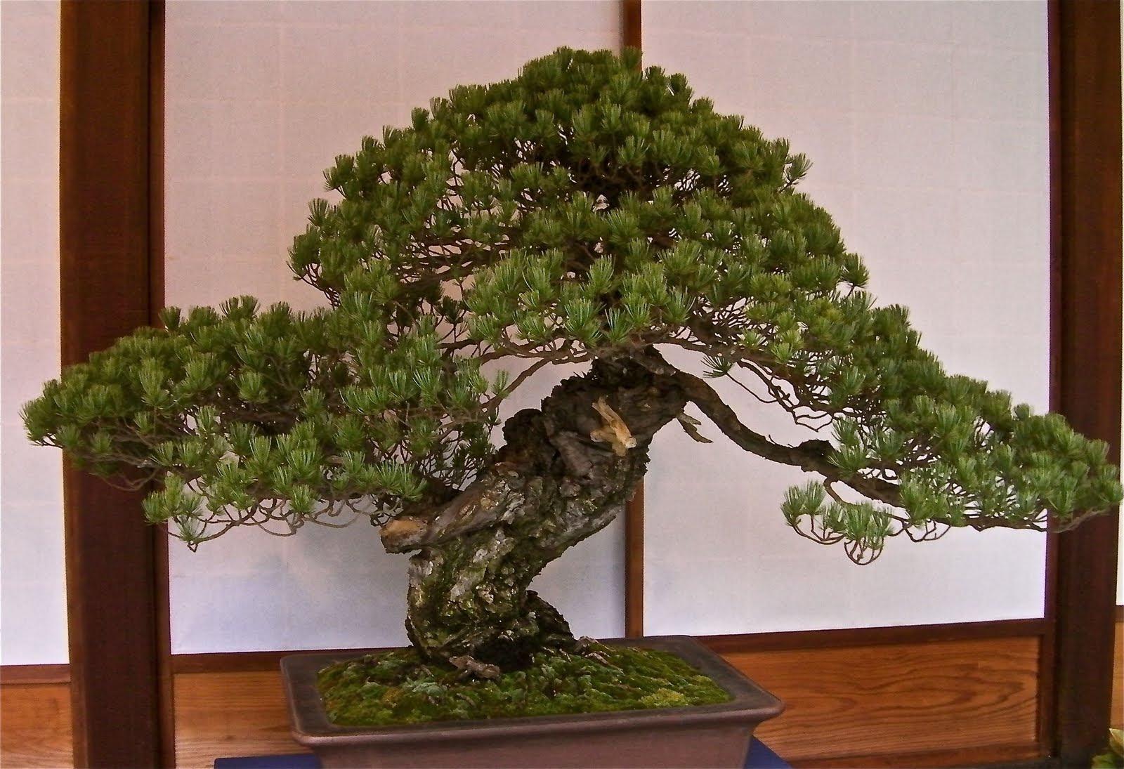 Petrified Bonsai Tree Bonsai Tree