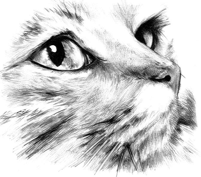 Utopía En Días Rojos La Mujer Gato