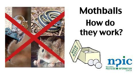 Mothballs   How do they work?   YouTube