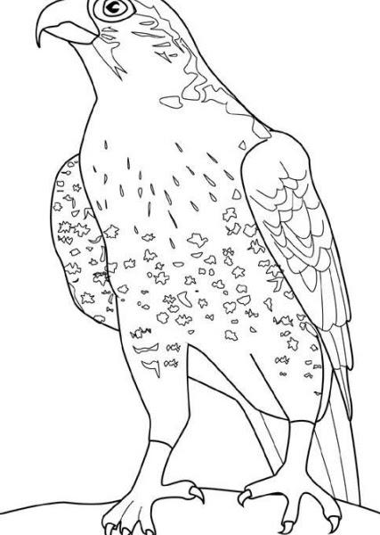 Disegno Aquila Da Coloraredisegno Rapace Da Coloraredisegno