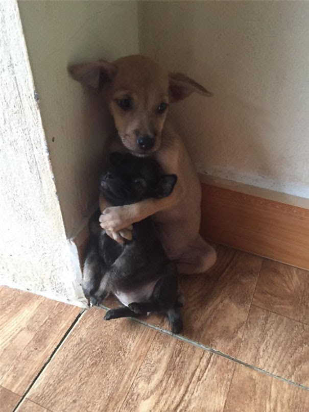 cachorrinhos-abandonados-na-param-de-se-abracar-desde-que-foram-resgatados-1