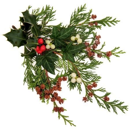 Winter und Weihnachten Flora und Fauna mit Stechpalme, Efeu, Mistel mit Beeren Clustern und Zeder Blatt Sprigs mit Tannenzapfen auf weißem Hintergrund Stockfoto - 15476598