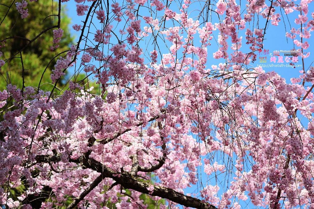2013-04-04-11h09m34IMG_1395