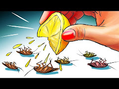 3 Best Tips How To Find Baby Cockroach, Facts & Solutions