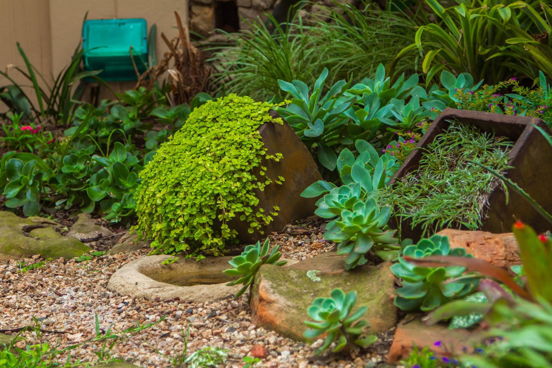 CREATING A SUCCULENT ROCK GARDEN — Eco Balance Landscaping Ballito