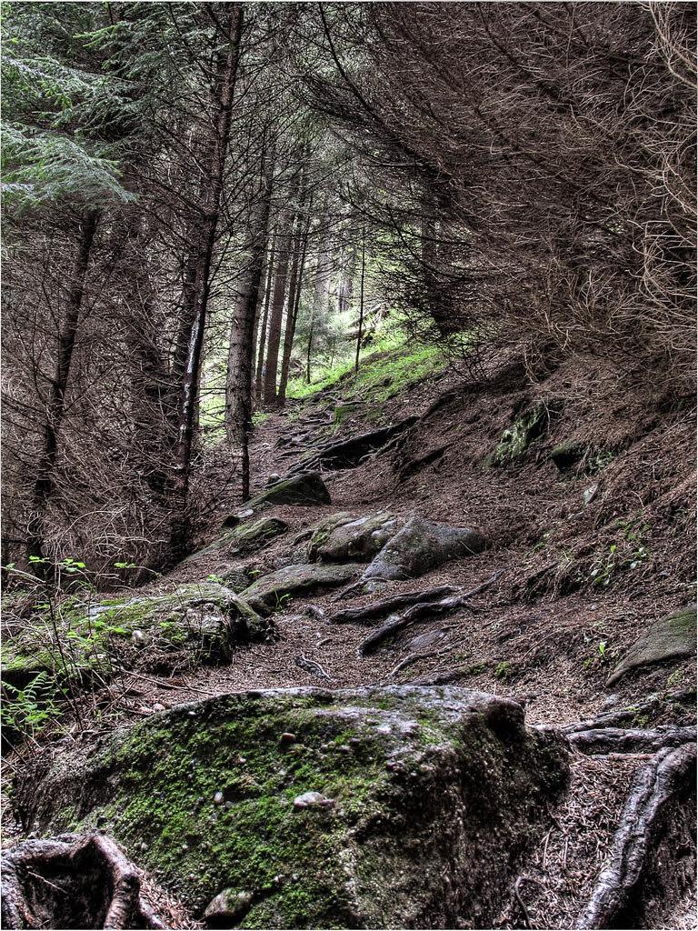 Ceahlău Massif Trail I