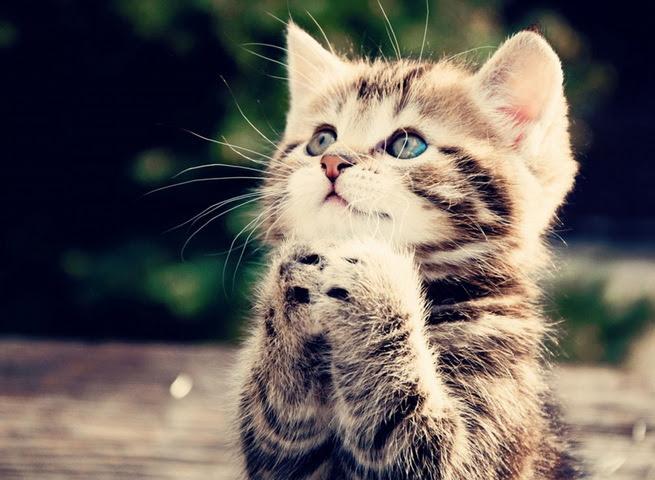 Download 98+  Gambar Kucing Lucu Untuk Wallpaper Paling Baru
