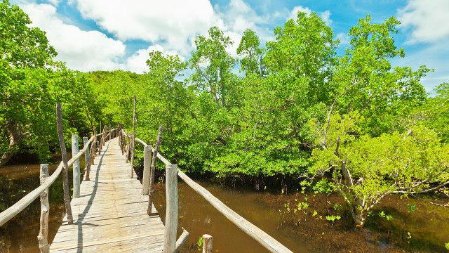 20131002-mangroves-03