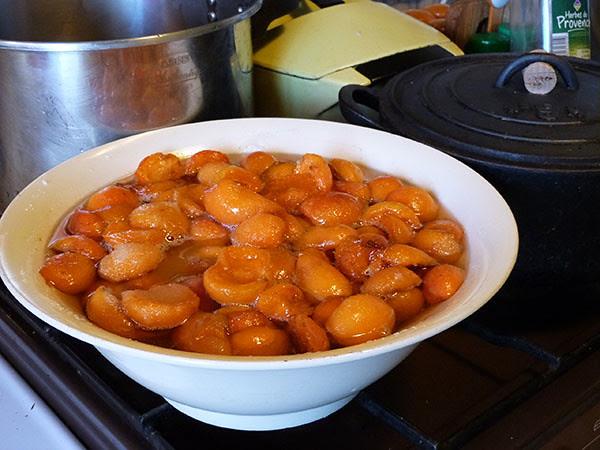 les derniers abricots