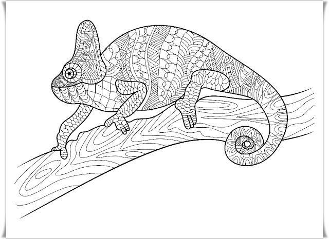 ausmalbilder für erwachsene chamäleon - catherine miller