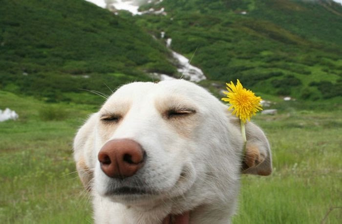 happiest_dogs_on_the_internet_28 (700x460, 98Kb)