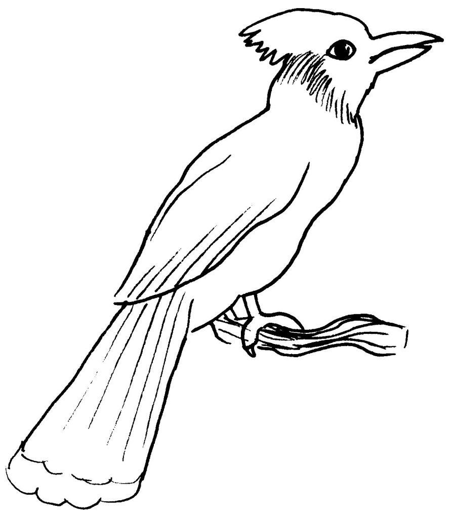 Dessin coloriage animal oiseau