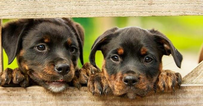 Las mejores fotos de cachorros de perro