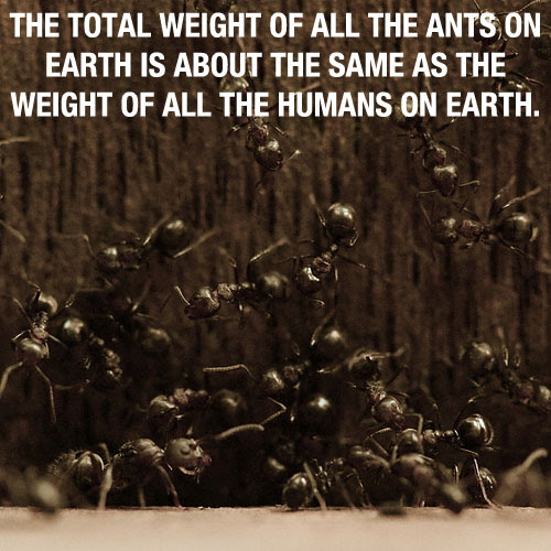 Amazing Effect about Ants