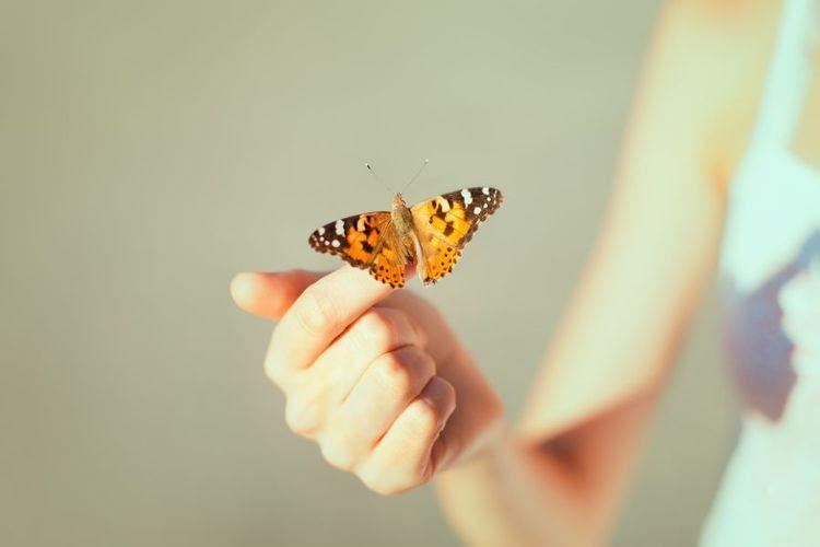 Beautiful-Butterfly-900