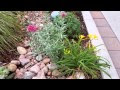 Landscaping Karl Foerster Grass Companion Plants