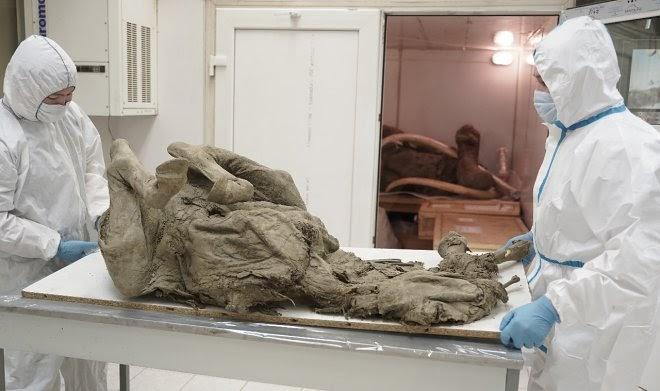 Российские ученые из «Вектора» исследуют древние вирусы сибирской вечной мерзлоты