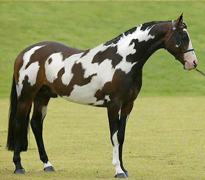 Pretty!  animal horse