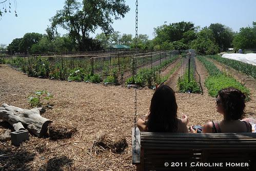Swing at Rain Lily Farm