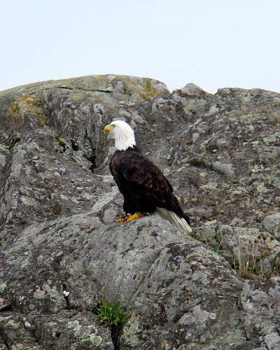 Eagle on the Rock