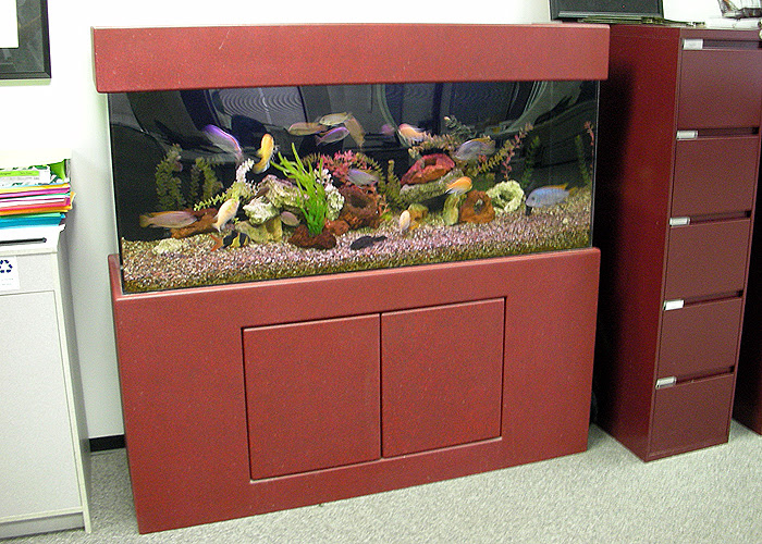 Professional and Experienced Aquarium Design and Maintenance for ...