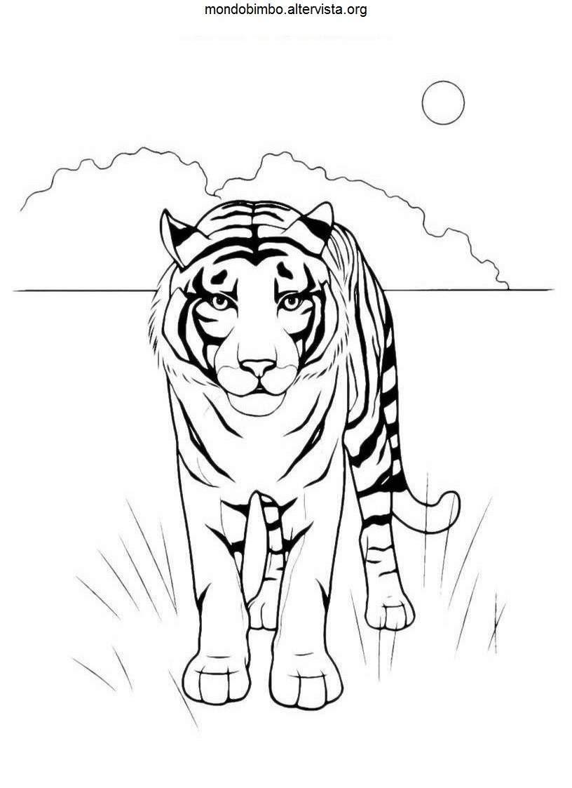 disegni da colorare animali feroci