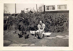 Nanny and her hens