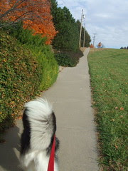 up the hill to the park