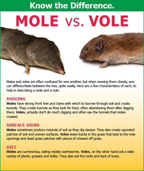 Mole Control in Delaware & Maryland   Activ Pest Solutions