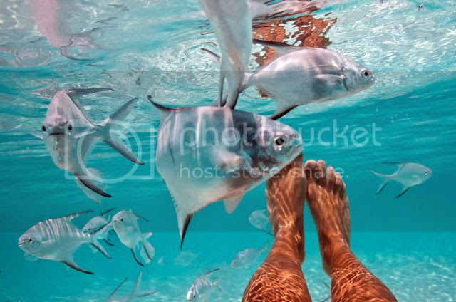 photo underwaterelenakalise_zps96b3d9e3.jpg