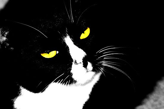 black and white cat cartoon. Cartoon Black and White Cat by