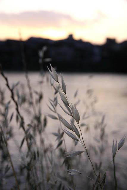 鴨川的夕陽
