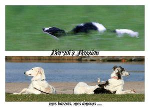 bannière 3 Borzoï Passion_ essai 4_reduite