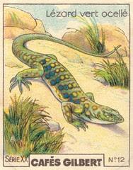gilbert reptile 12